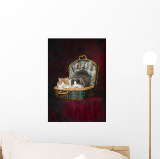 Portrait of two cats in a basket;St albert alberta canada Wall Mural
