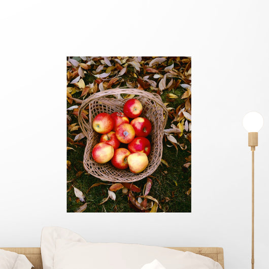 Agriculture - Fresh Fuji apples Wall Mural