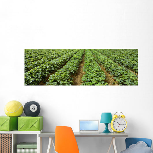 Agriculture - Early season strawberry field / Nooksack Valley Wall Mural