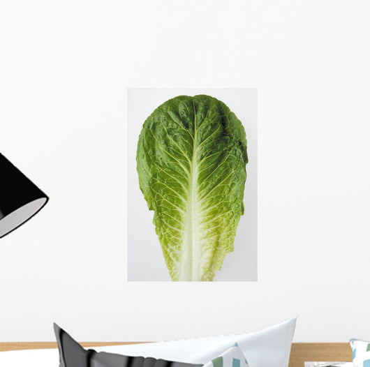 Agriculture - Closeup of a Romaine lettuce leaf on a white surface Wall Mural