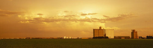 Agriculture - Grain elevators and an early growth corn field Wall Mural