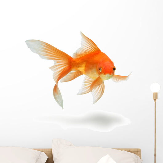 gold fish Wall Decal