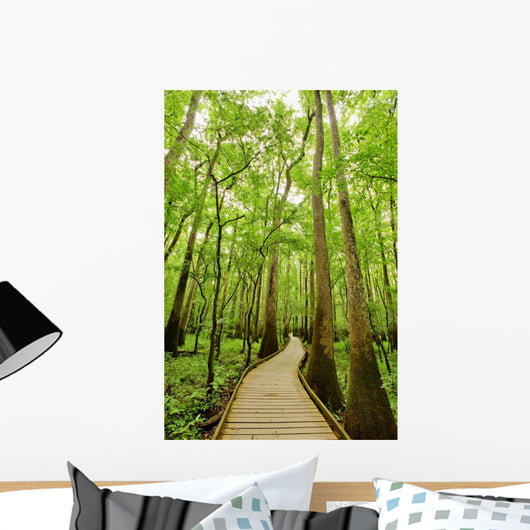 Bald cypresses in Congaree National park, South Carolina Wall Mural