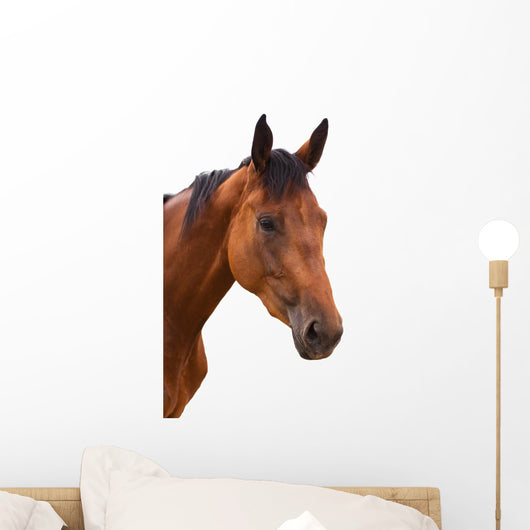 Horse Head Isolated Wall Decal