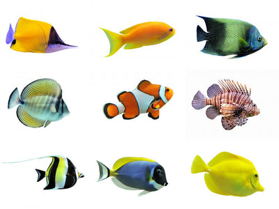 Nine Tropical Fish Wall Decal