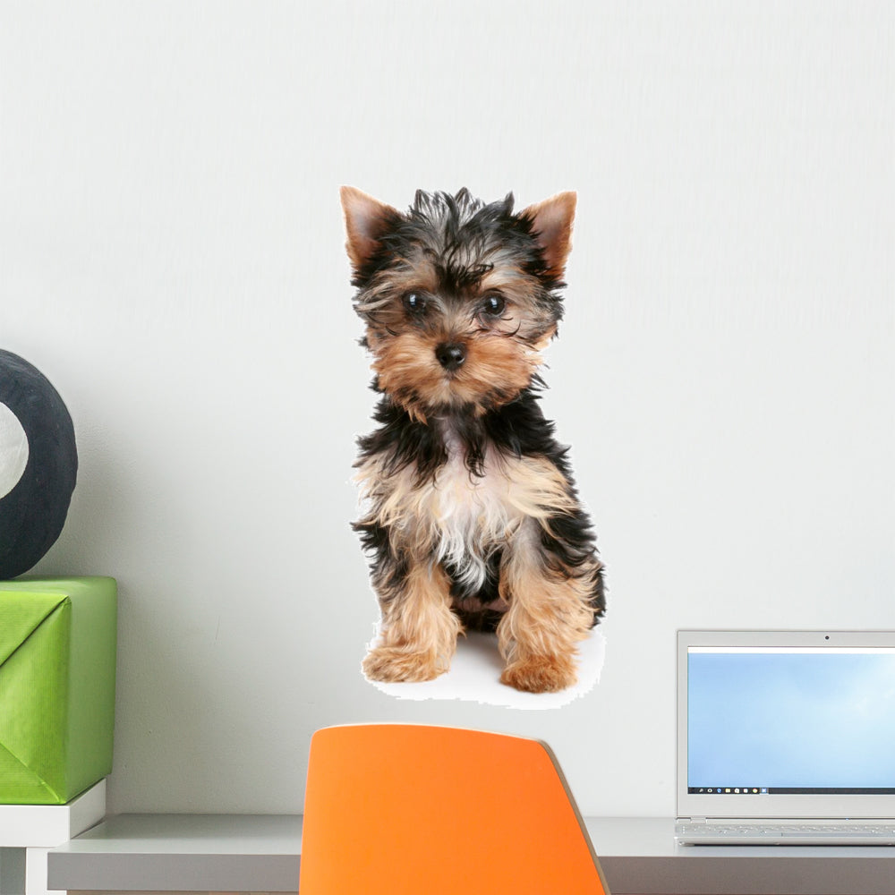Yorkshire Terrier Puppy White Wall Decal Wallmonkeys Com