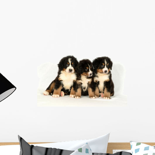 Bernese mountain 40 days Wall Decal