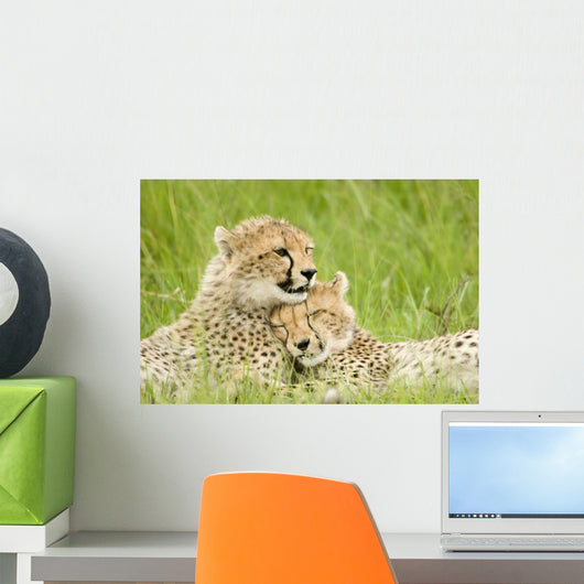 Cheetah Cubs Wall Mural