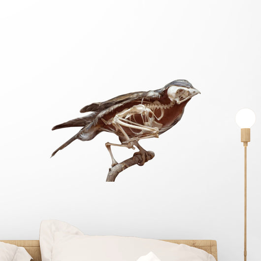 Stuffed Bird With Skeleton Inside Wall Decal