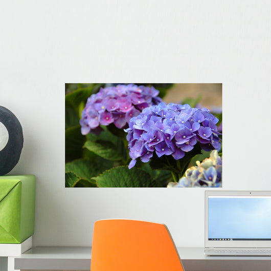 Hydrangea in the Azores Wall Mural