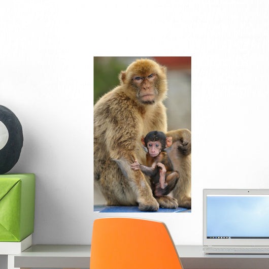 Monkey and Its Baby Wall Mural