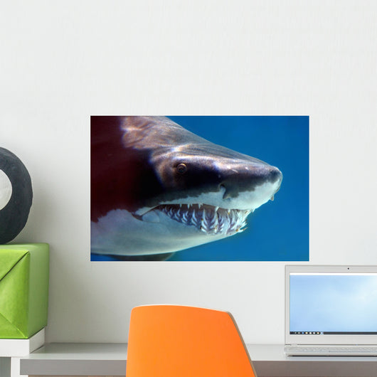 shark with mouthful of teeth Wall Mural