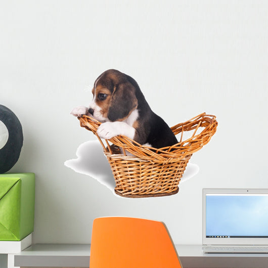 Sad beagle puppy in the basket Wall Mural
