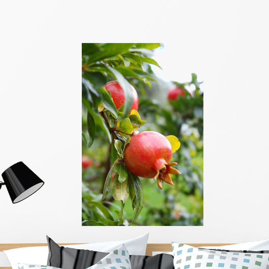Pomegranate Fruit Wall Mural
