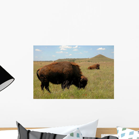 Buffalo Grazing on Prairie Wall Mural
