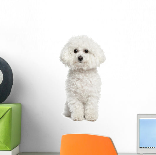 Bichon Frise Wall Decal U2013 WallMonkeys.com