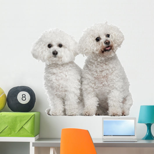 ... Bichon Frise 9 And Wall Decal ...