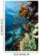 Fish Coral and Ocean Wall Mural