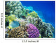 Underwater Life of a Hard-Coral Reef Wall Mural