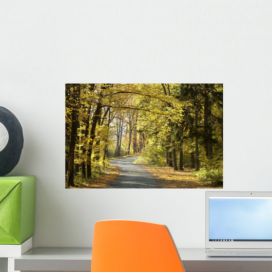 Road through the autumn forest on a sunny morning Wall Mural