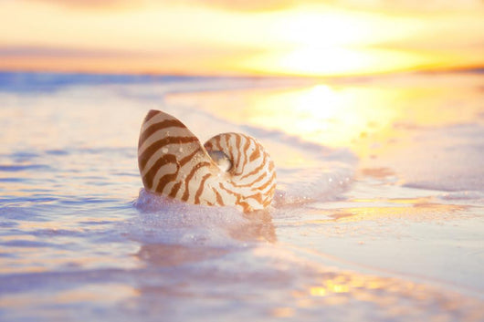 nautilus shell in the sea , sunrise Wall Mural