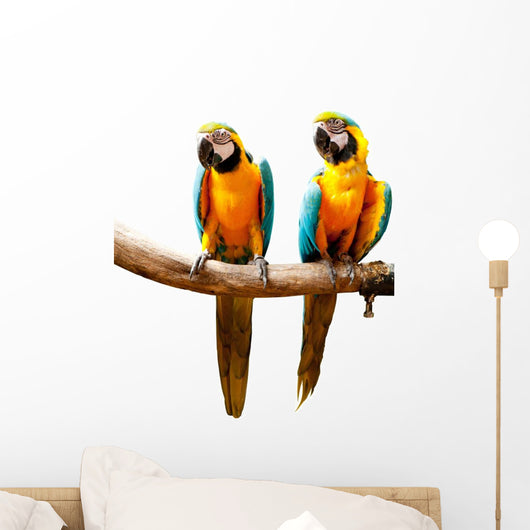 Colourful Parrot Bird Sitting on the Perch Wall Decal