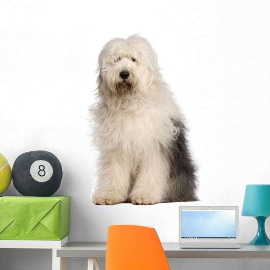 Old English Sheepdog, 2 and a half years old, sitting Wall Decal