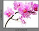 Isolated Orchid Wall Decal