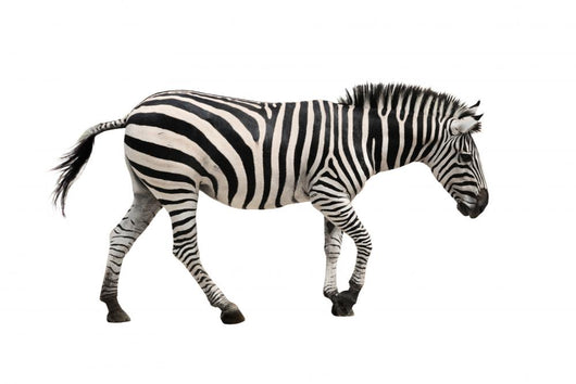 zebra Wall Decal