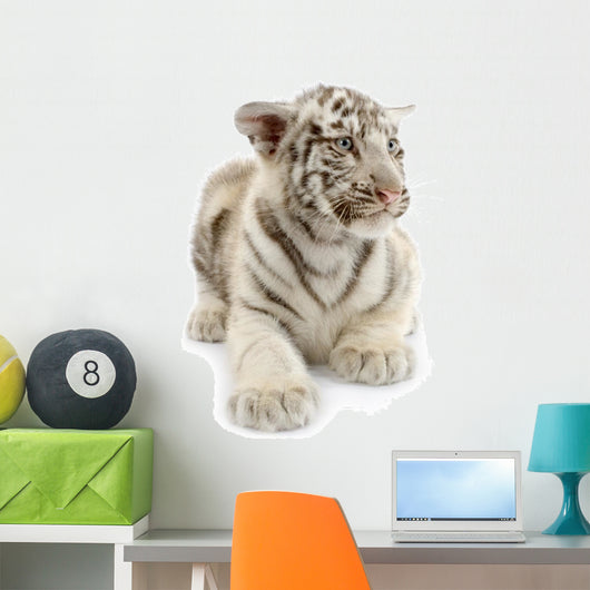 White Tiger From 3 Weeks Wall Decal