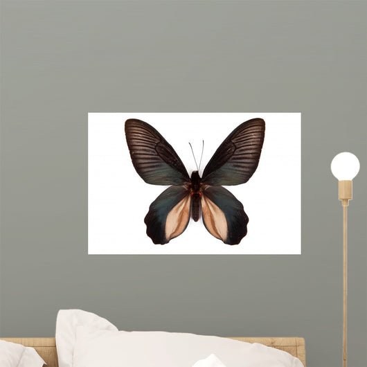 Black Butterfly Atrophaneura Dixoni Wall Decal