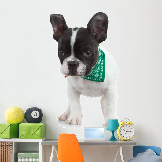 Curious French Bulldog Wall Decal