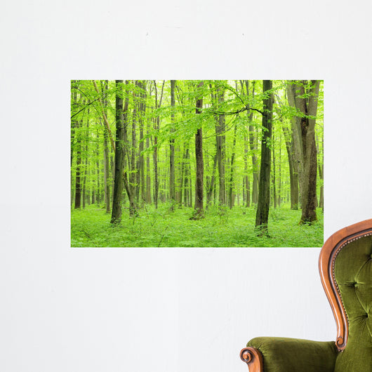 green forest Wall Mural
