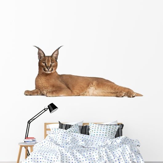 Caracal Caracal Caracal 6 Months Old Wall Decal
