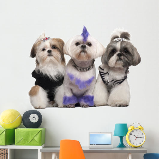 Three Shih Tzus Dressed up Wall Decal