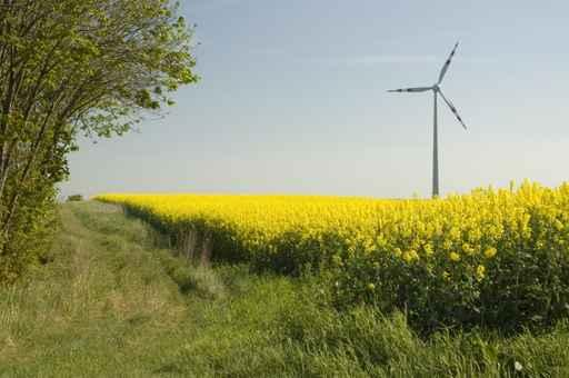 Wind Turbines and Rapeseed Wall Decal Design 2