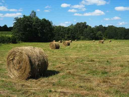 Hay Field Wall Decal