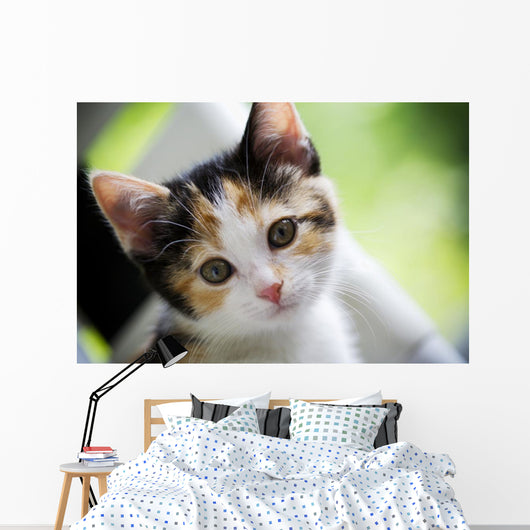 Kitten Innocence Wall Mural