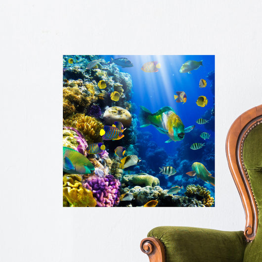 Coral Colony and Coral Fish Wall Mural