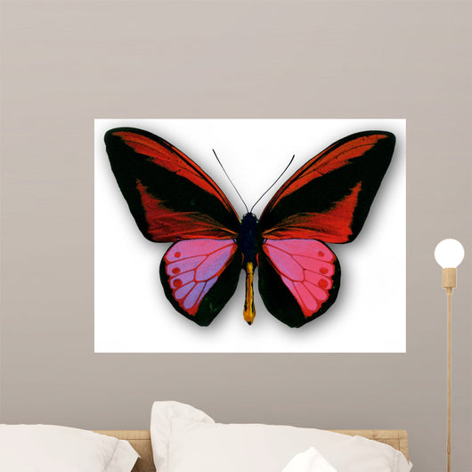 Papillon Wall Decal
