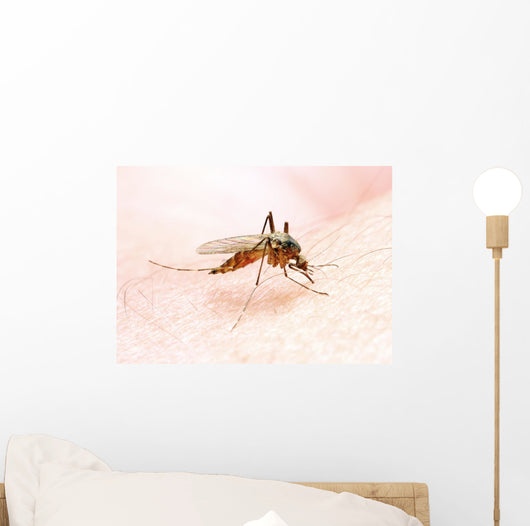 Anopheles Mosquito - Dangerous Vehicle of Infection Wall Mural