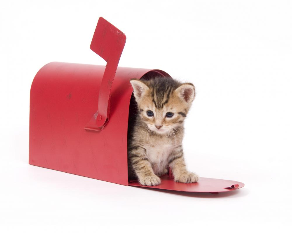 Small Kitten Hides Inside of Red Mailbox Wall Decal