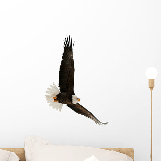 The Bald Eagle Haliaeetus Leucocephalus Wall Decal