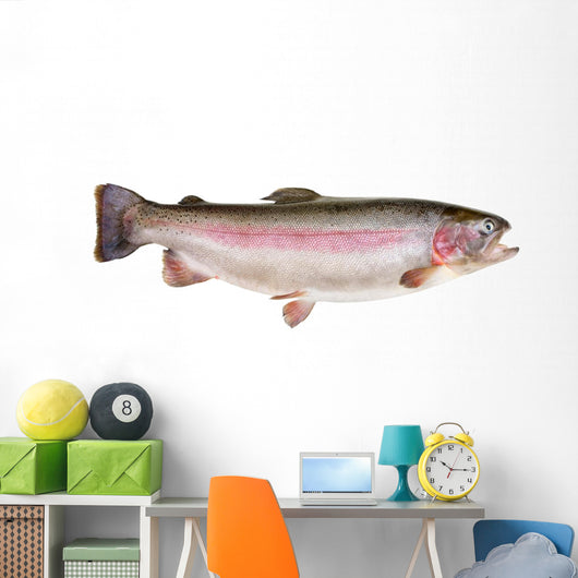 Rainbow Trout Oncorhynchus Mykiss Wall Decal