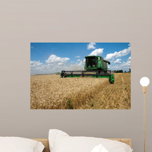 Combine Harvests Wheat Field