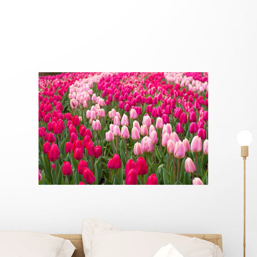 Field Tulips Wall Mural