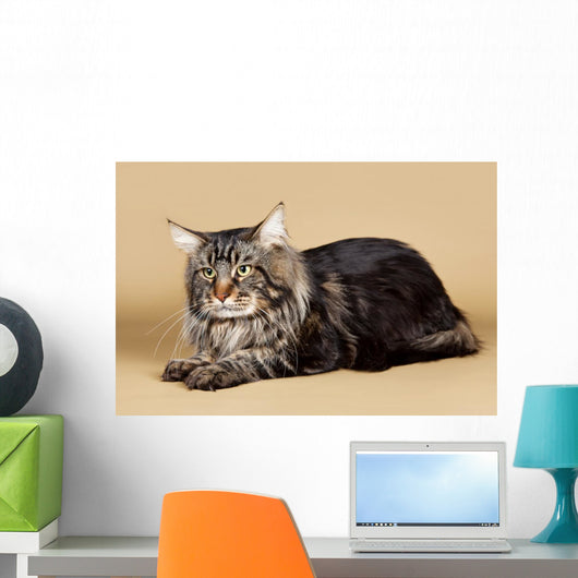 Maine Coon Brown Wall Mural