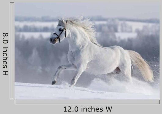 White Horse Gallops Field