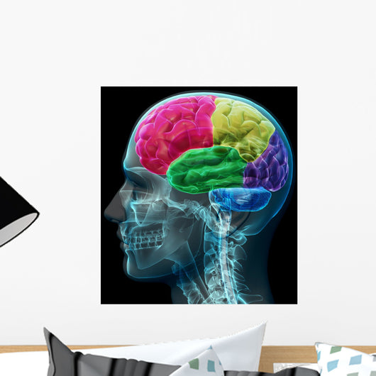 Colored sections of a male human brain ,x ray concept. Wall Mural