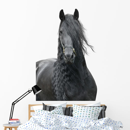 Friesian Stallion on a White Background Wall Decal
